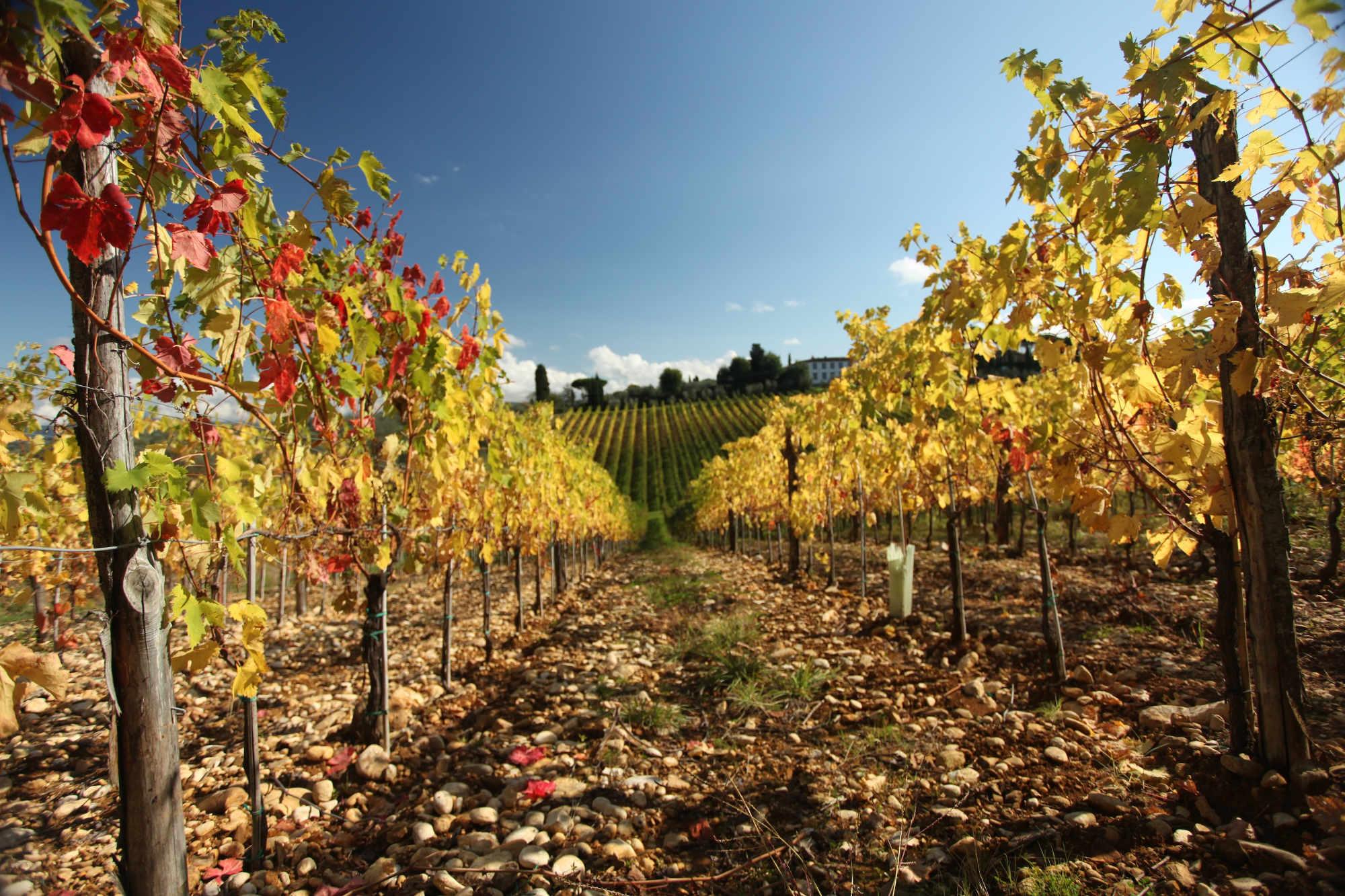 autumn_vineyards4